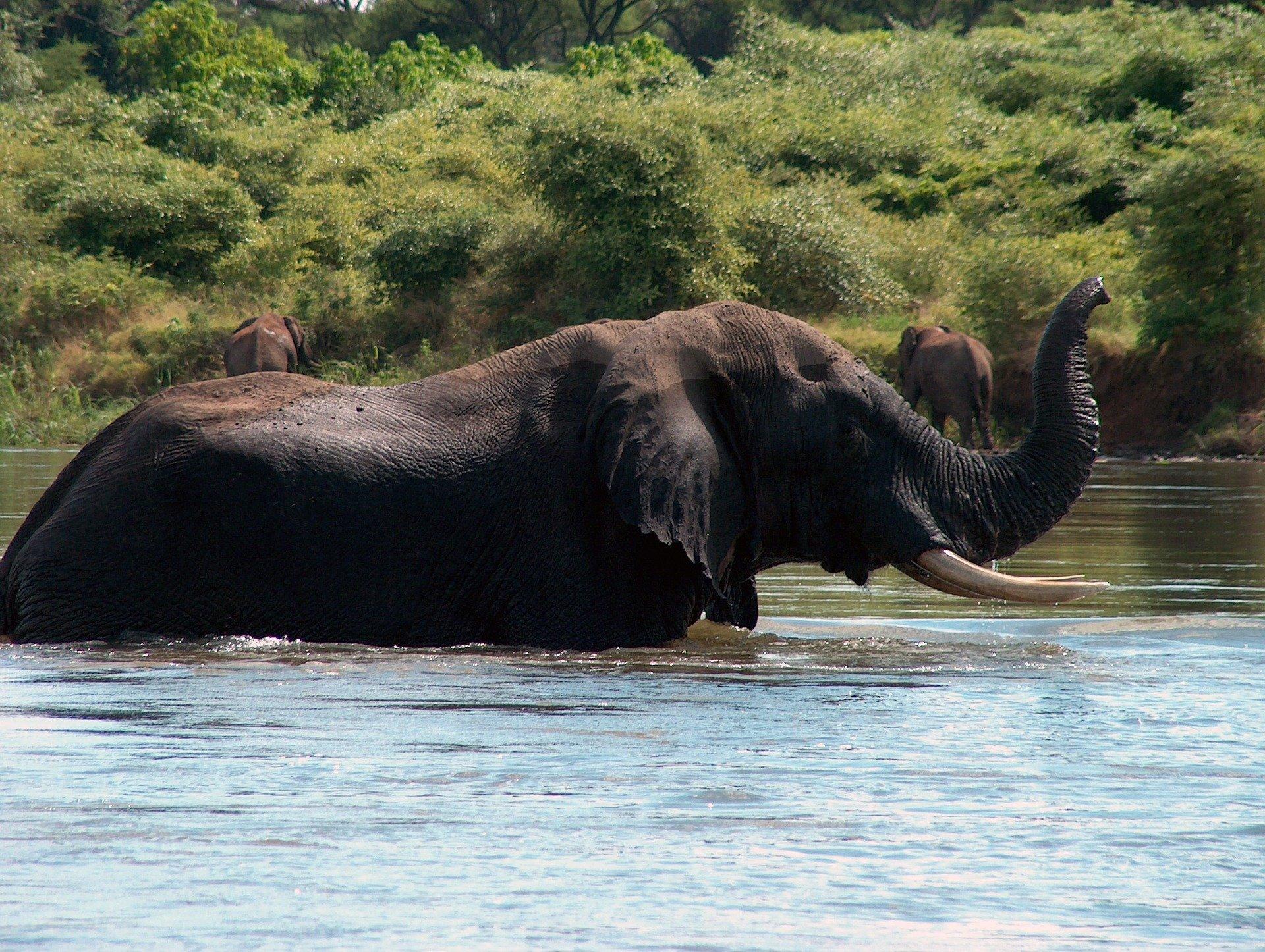 elephant-1351906_1920