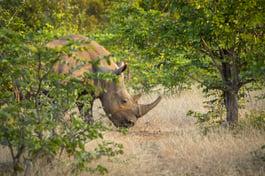 luxury-safari-rhino-wild