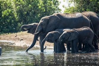 luxury-safari-elephant