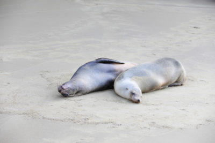 galapagos-silverseas-cruise