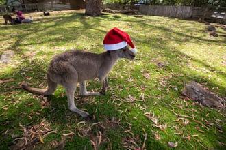 11_19-blog-sydney-kangaroo-santa