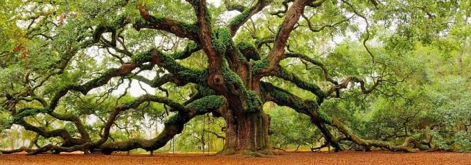City Parks in the Southeast - Angel Oak Park Charleston