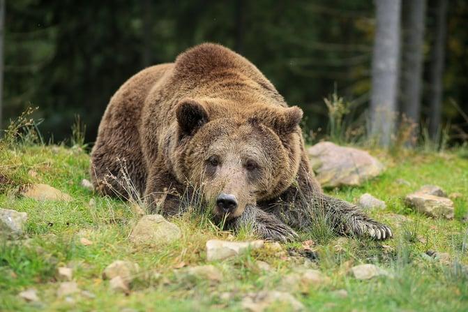 bear-3990912_1280